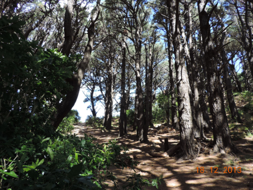 Ringwraith Path 2