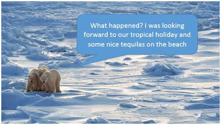 Polar Bears Arctic Ice