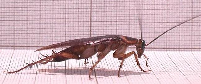 Cockroach economy