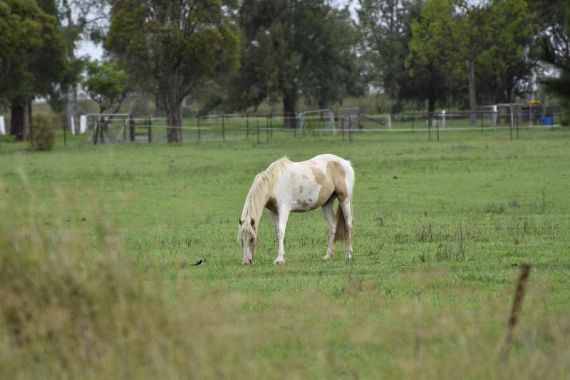 Favourite Shot Horse Grazing