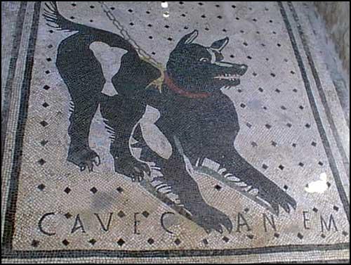 Cavecanem1