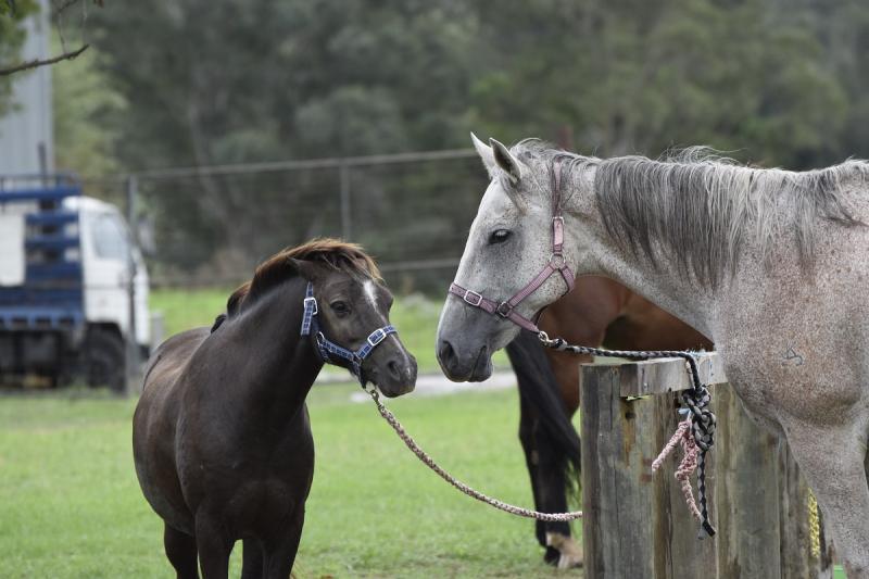 Friendly Horses Close Up