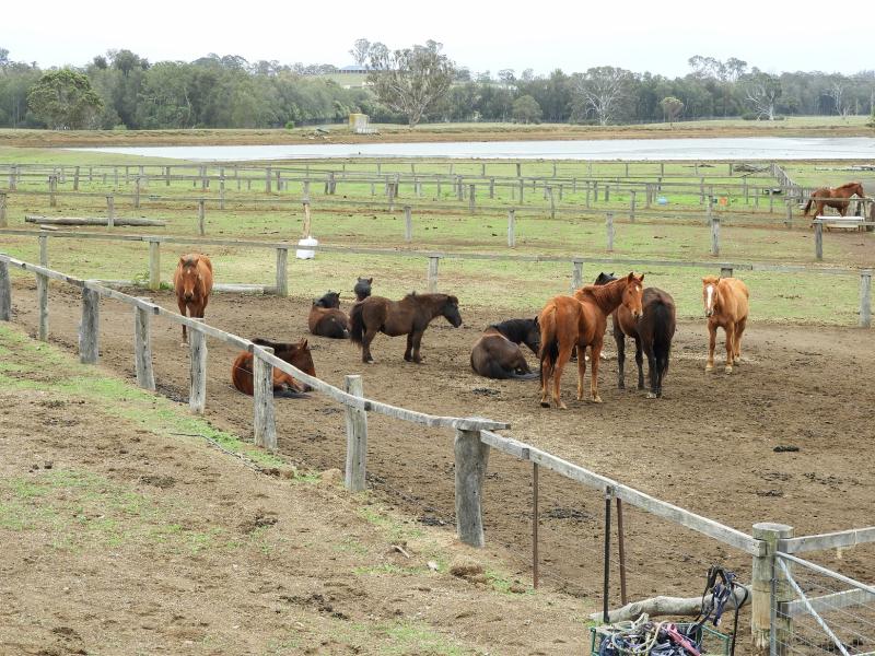 Horses in paddock 2