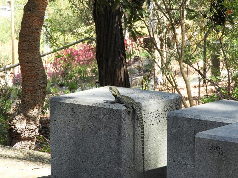 Lizard 2 On Concrete Block