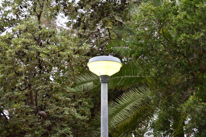Light in Park