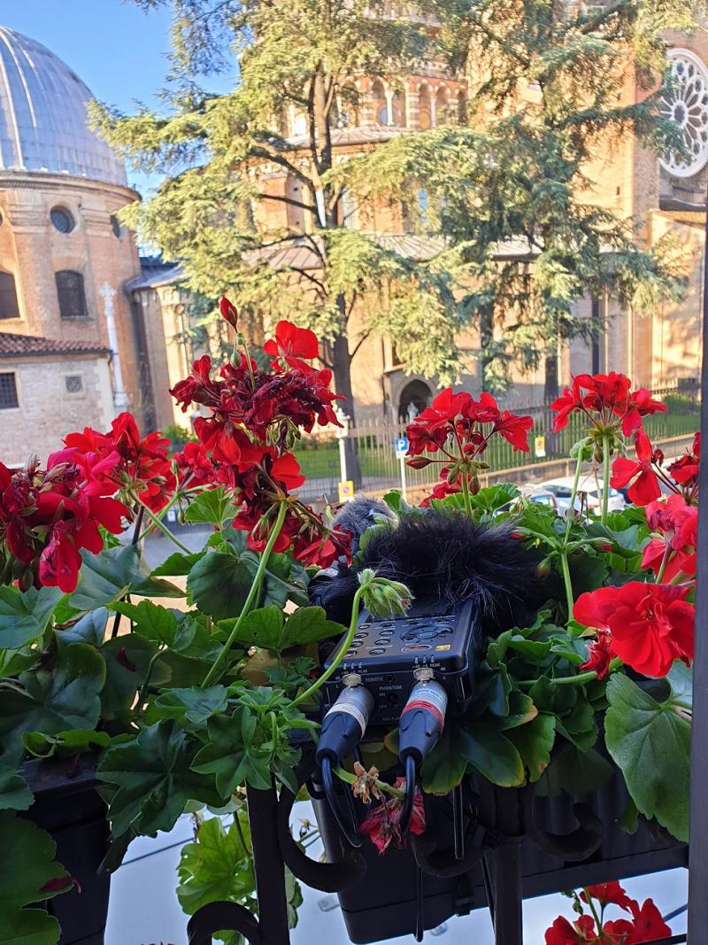 DR 100 Flower Pot Padua